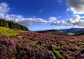 Irisch landscape